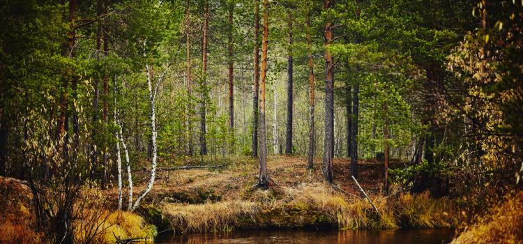 Осенний лес во время дождя.