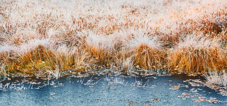 Зима. Начало. Часть 2